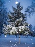Árvore nevado dos christmass na cidade da noite sob a queda de neve fotografia de stock