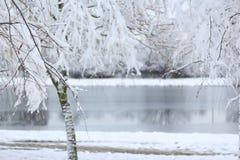 Árvore nevado na frente de um rio congelado Fotos de Stock Royalty Free