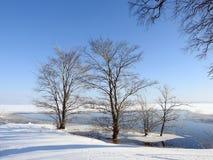 Árvore nevado no inverno no campo de inundação, Lituânia foto de stock royalty free
