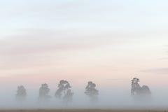 Árvore nevoenta Fotos de Stock