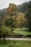 Árvore nevoenta Foto de Stock Royalty Free