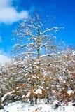 A árvore nevou em Legutiano Fotos de Stock