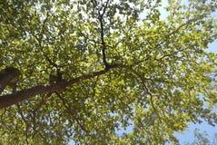 Árvore no abaixo Fotos de Stock Royalty Free