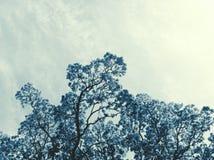Árvore no azul Fotos de Stock