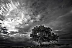 Árvore no b&w Foto de Stock Royalty Free