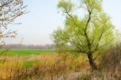 Árvore no banco da mola de The Creek Imagem de Stock