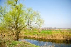Árvore no banco de The Creek Fotos de Stock Royalty Free