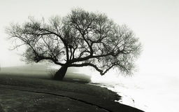 Árvore no banco de rio fotografia de stock royalty free