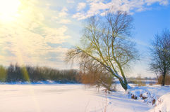 Árvore no banco de um rio congelado nas raias do sol Imagens de Stock Royalty Free