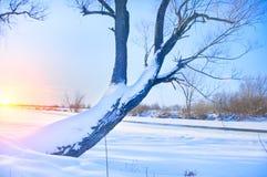 Árvore no banco do rio coberto com o gelo Fotos de Stock Royalty Free