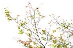 Árvore no branco foto de stock royalty free