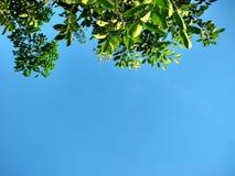 Árvore no céu Imagem de Stock