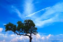 Árvore no céu azul Fotos de Stock Royalty Free