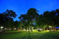 Árvore no céu azul fotografia de stock
