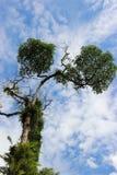 A árvore no céu azul Fotografia de Stock