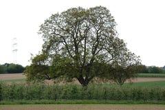 A árvore no campo Foto de Stock