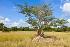 Árvore no campo Fotografia de Stock