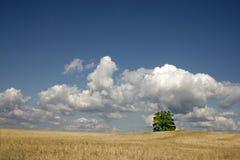 Árvore no campo Imagem de Stock Royalty Free