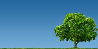 Árvore no campo ilustração stock