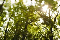 Árvore no campo Imagens de Stock