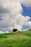 Árvore no campo Foto de Stock Royalty Free