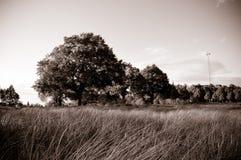 Árvore no campo fotos de stock
