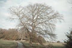 Árvore no campo do North Yorkshire Fotos de Stock Royalty Free