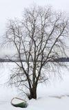 Árvore no campo nevado Imagens de Stock
