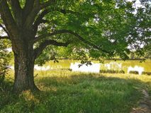 Árvore no campo pelo lago Fotos de Stock Royalty Free