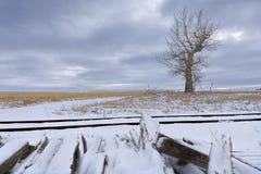 Árvore no campo por trilhas no inverno Foto de Stock Royalty Free