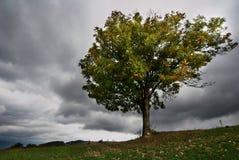 Árvore no clima de tempestade Fotografia de Stock