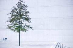 Árvore no concreto Imagens de Stock Royalty Free