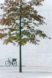 Árvore no concreto Fotografia de Stock
