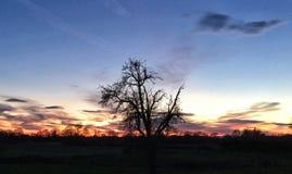 Árvore no crepúsculo Foto de Stock