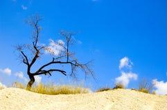 Árvore no deserto Fotografia de Stock Royalty Free