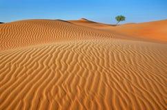 Árvore no deserto Fotos de Stock Royalty Free