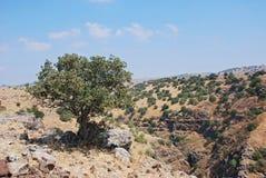 Árvore no deserto Imagem de Stock