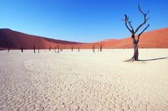 Árvore no deserto - Deadvlei Foto de Stock