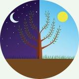 Árvore no dia e na noite Fotografia de Stock Royalty Free