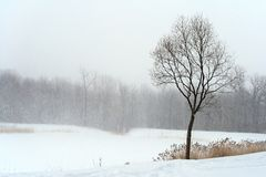 Árvore no embaçamento enevoado do blizzard do inverno foto de stock royalty free