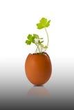 Árvore no escudo de ovo isolado no fundo branco Foto de Stock Royalty Free