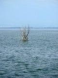 Árvore no fim do lago acima Imagens de Stock