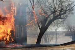 Árvore no fogo Fotografia de Stock