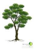 Árvore no fundo branco Imagem de Stock