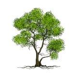 Árvore no fundo branco Imagens de Stock Royalty Free