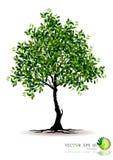 Árvore no fundo branco Fotografia de Stock