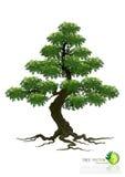 Árvore no fundo branco Fotos de Stock Royalty Free