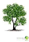 Árvore no fundo branco Imagem de Stock Royalty Free