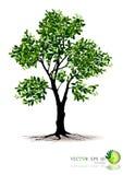 Árvore no fundo branco Fotos de Stock