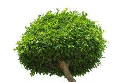 Árvore no fundo branco, elemento do objeto para o projeto fotos de stock royalty free